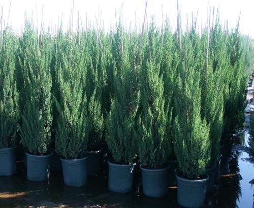 Trees Sunland Nursery Xeric Plants